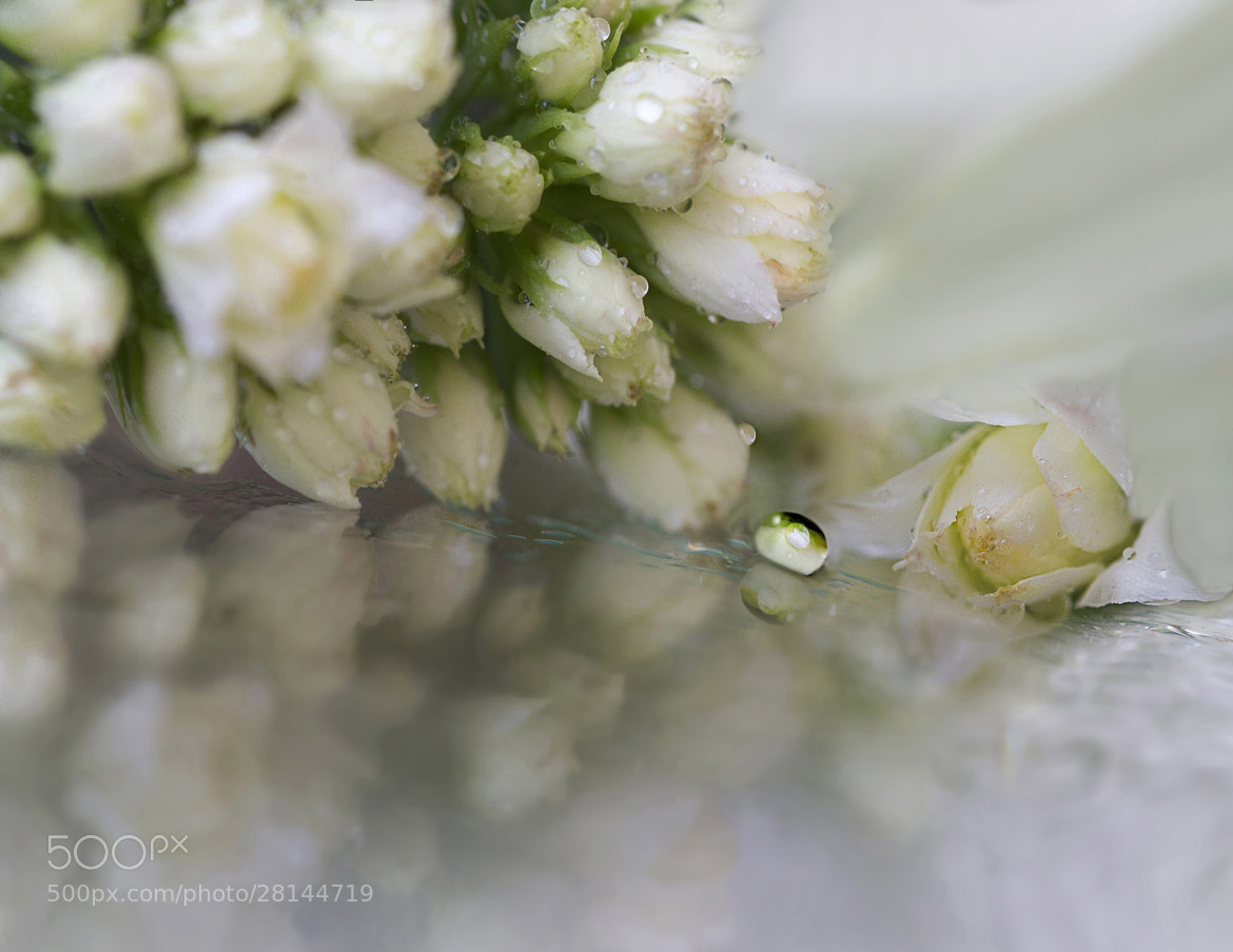 Photograph Soft by Eleonora Di Primo on 500px