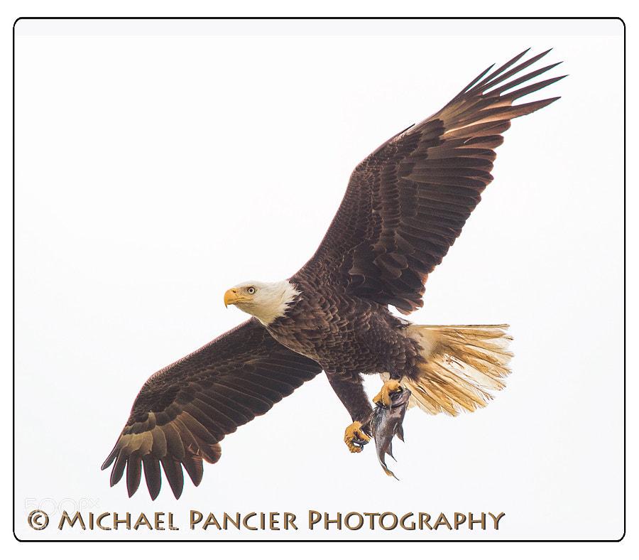 Three Lakes Wildlife Managemnt Area, Osceola County, Florida