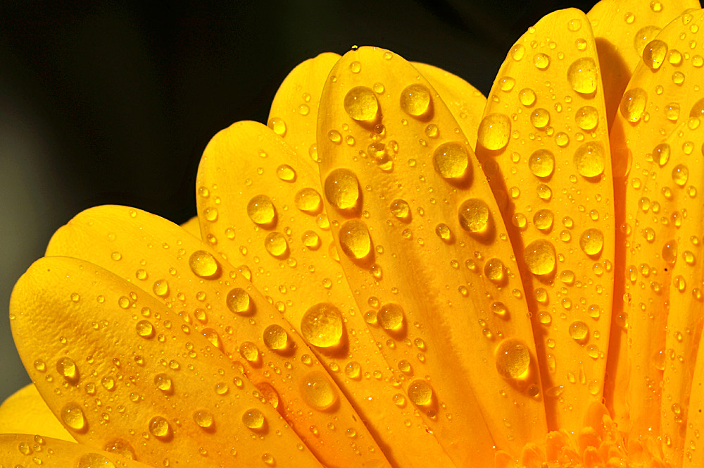 Photograph Water droplets  by Sorin Petculescu on 500px