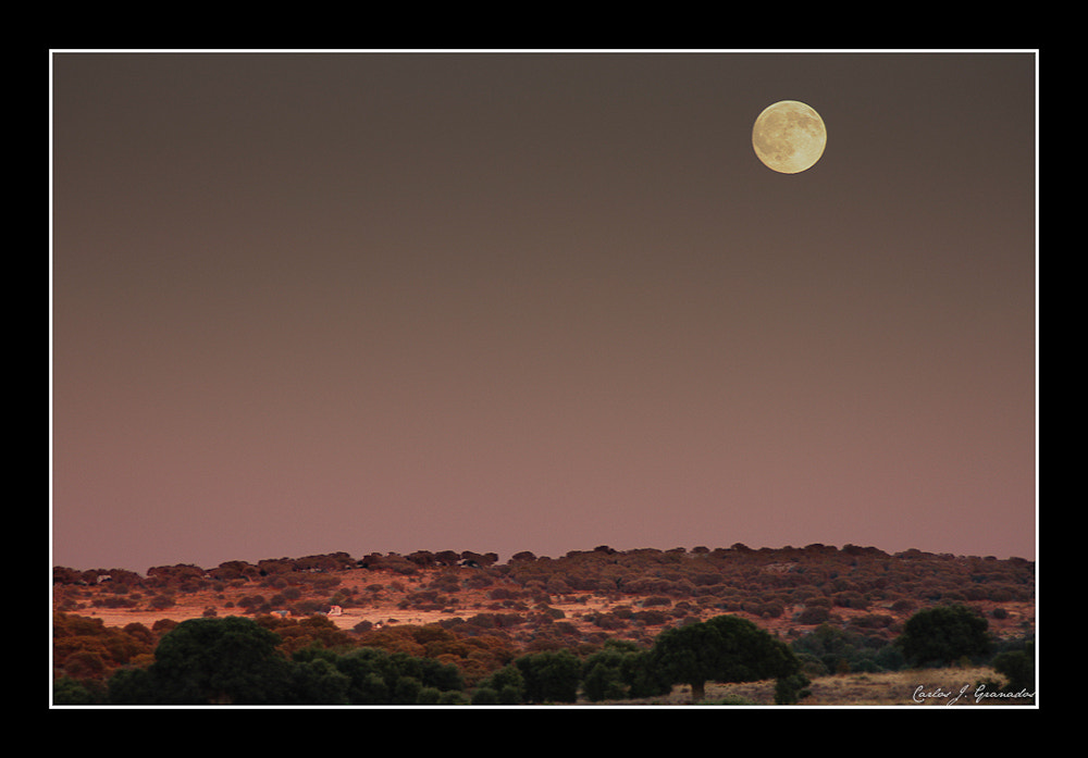 Photograph La luna en el encinar by Carlos JG on 500px
