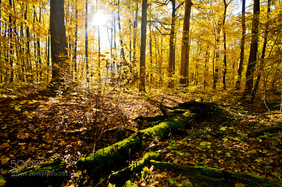 Photograph yellow forest by Felix W. Sch on 500px