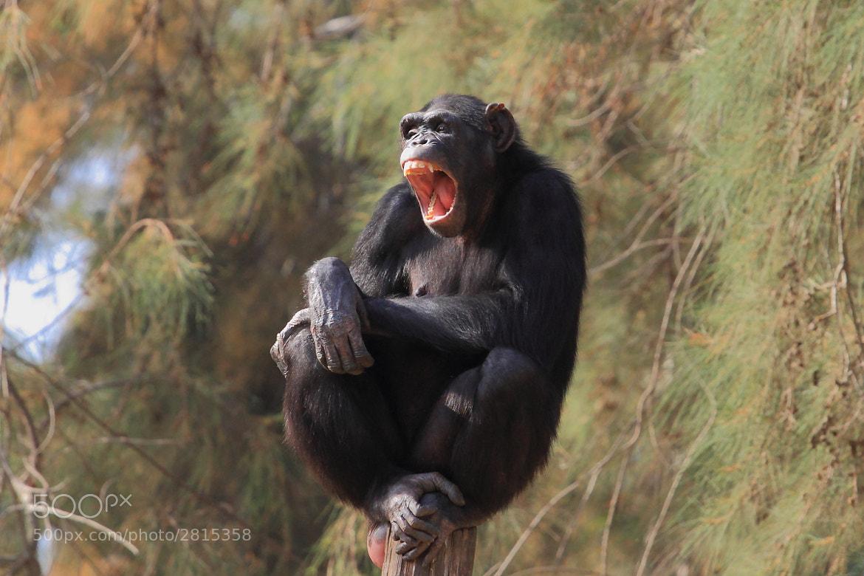 Photograph Big yawn  by Yuri Gomelsky on 500px
