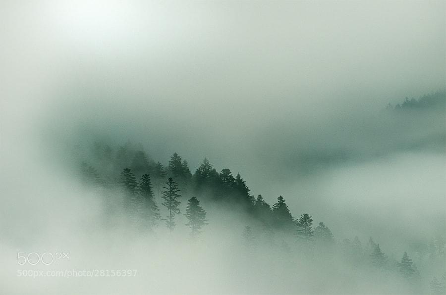 Photograph morning fog by František Hajduk on 500px