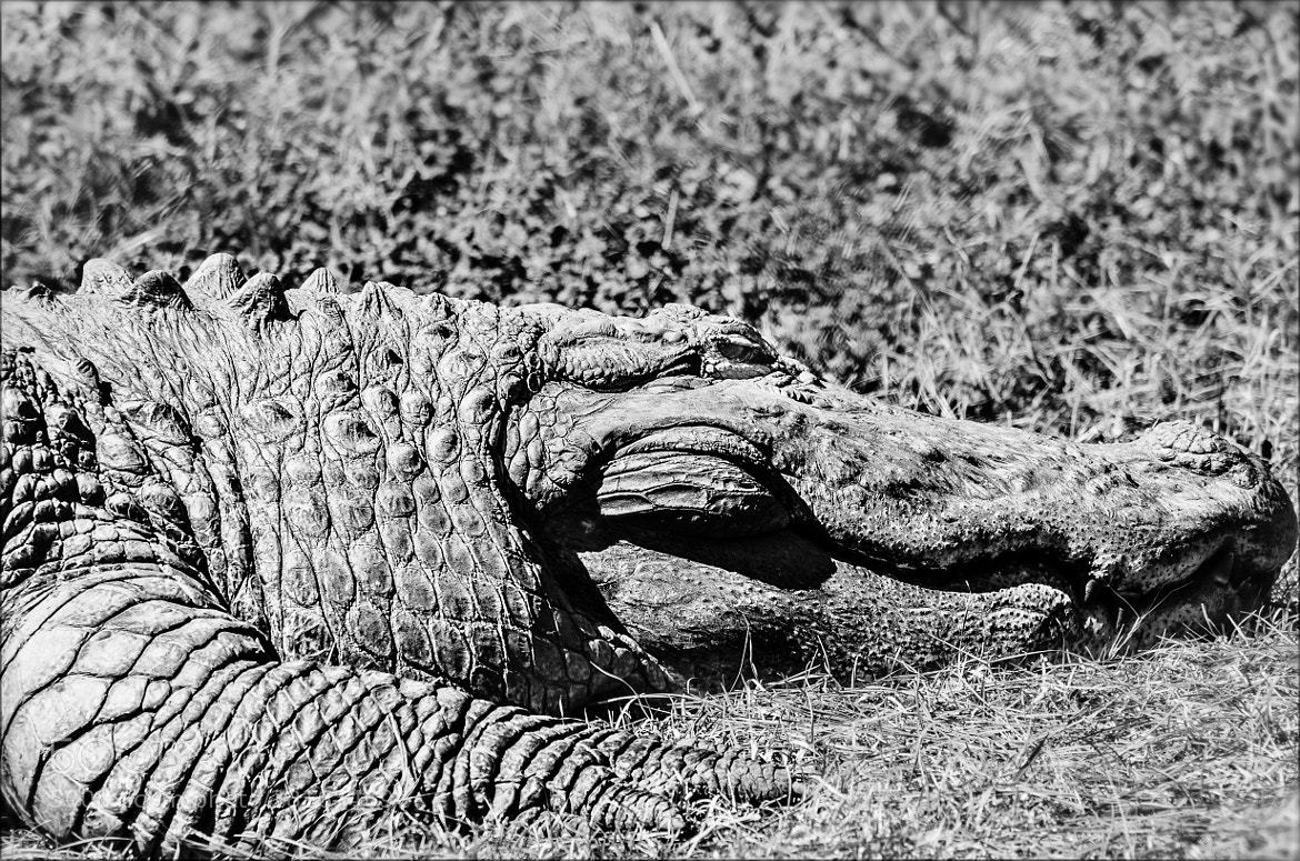 Photograph croc croc by younes sediki on 500px
