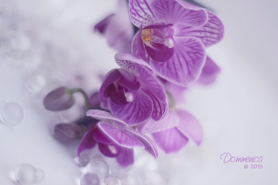 Photograph Orchids by Dommenica on 500px