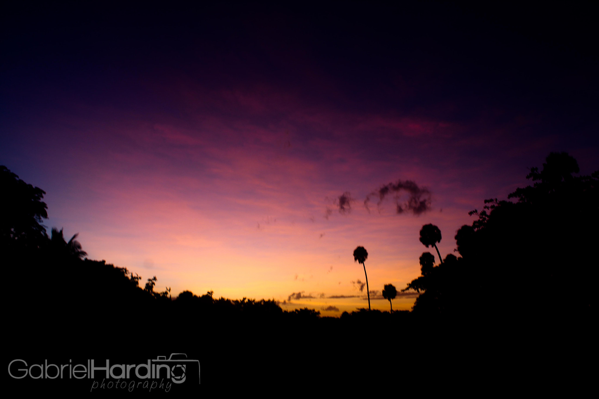 Photograph Palm Sunset by Gabriel Harding on 500px
