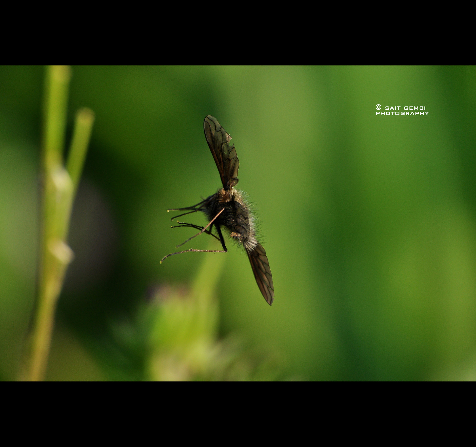 Photograph FLY by Sait Gemci on 500px