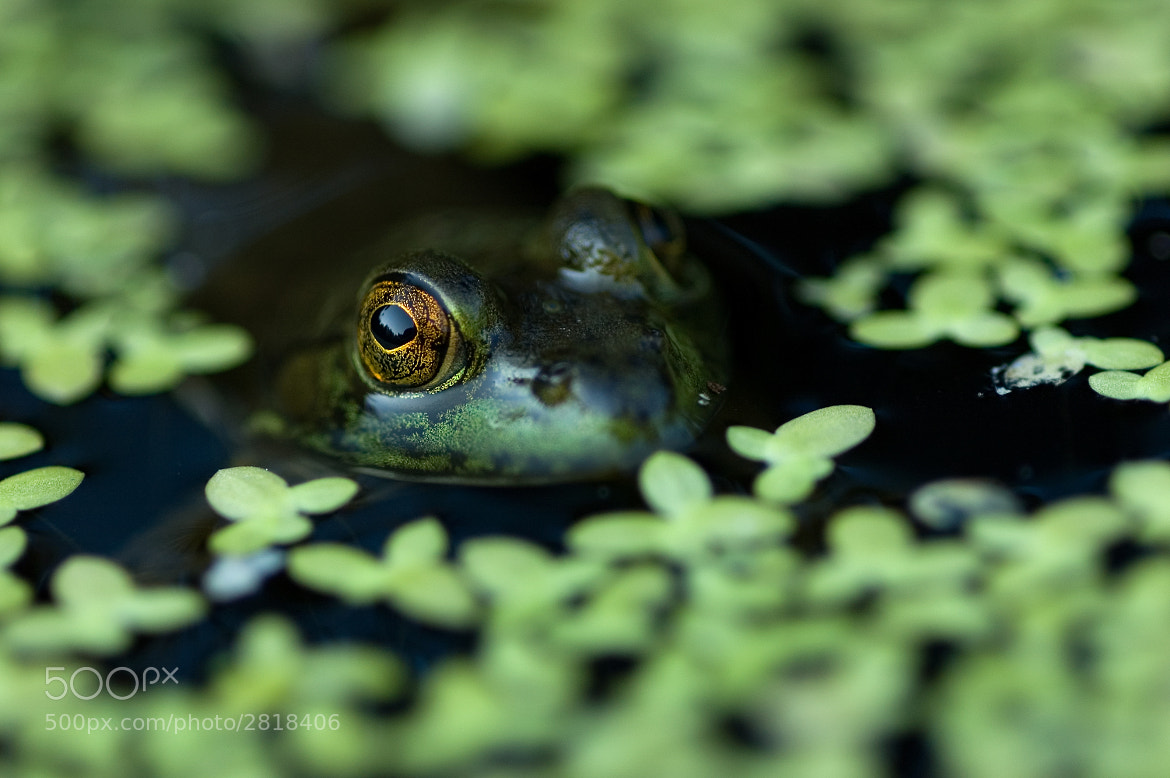 Photograph Patient Frog by Ethan Hall on 500px
