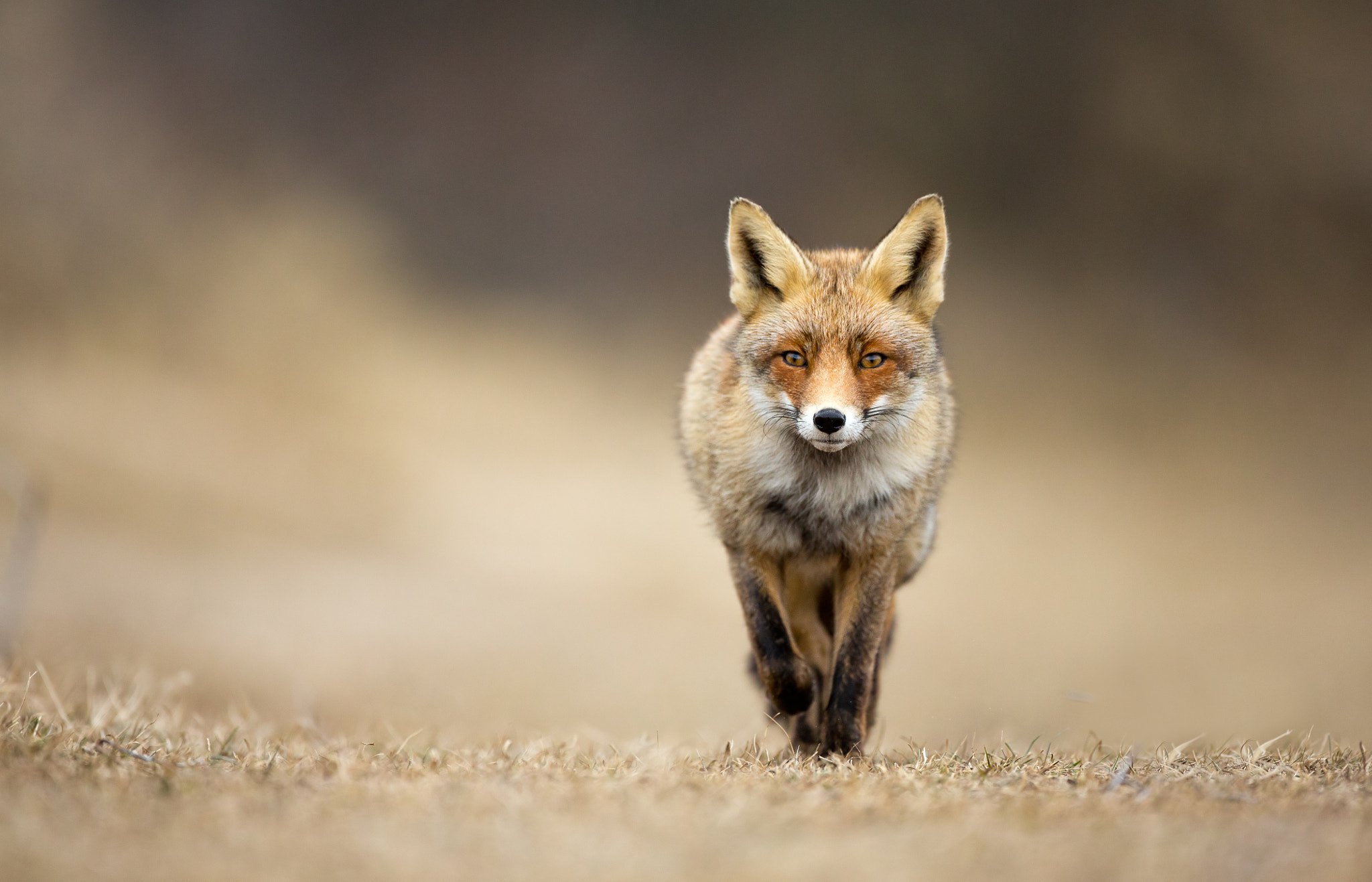 Photograph Walking straight toward me by Menno Schaefer on 500px