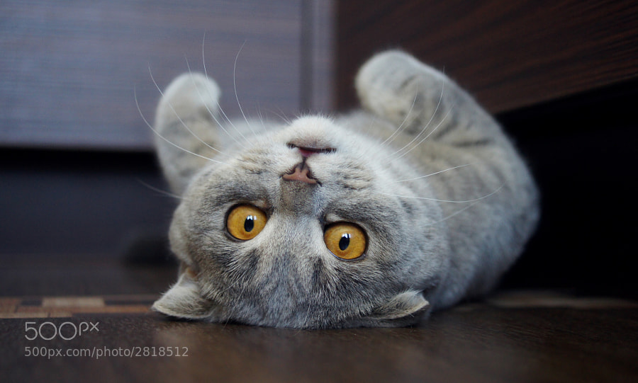 Upside Down by Alina Esther