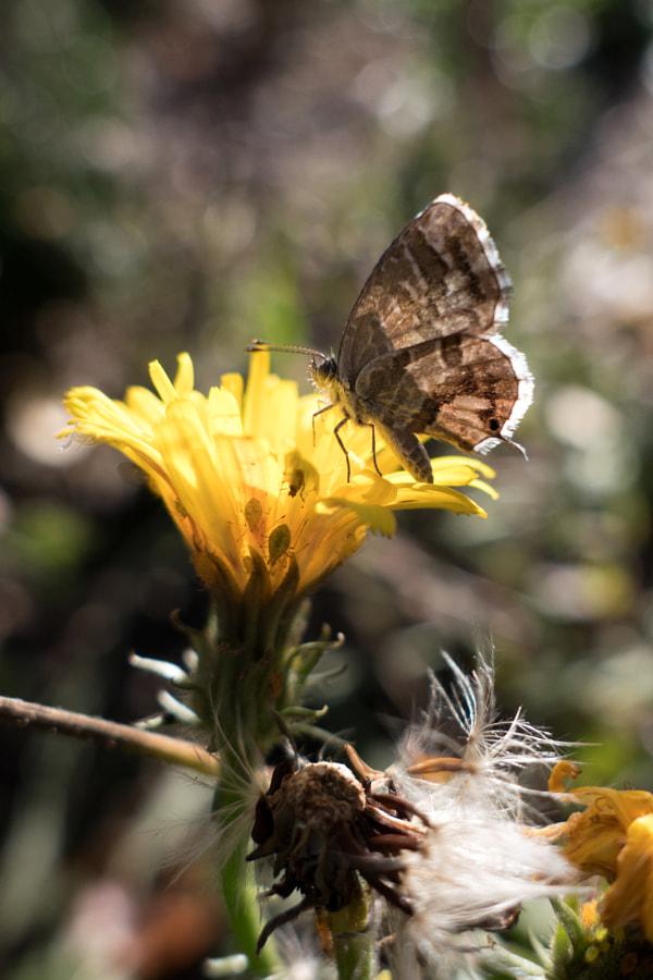 Le papillon et les pucerons (butterfly and aphids) de Christine Druesne sur 500px.com