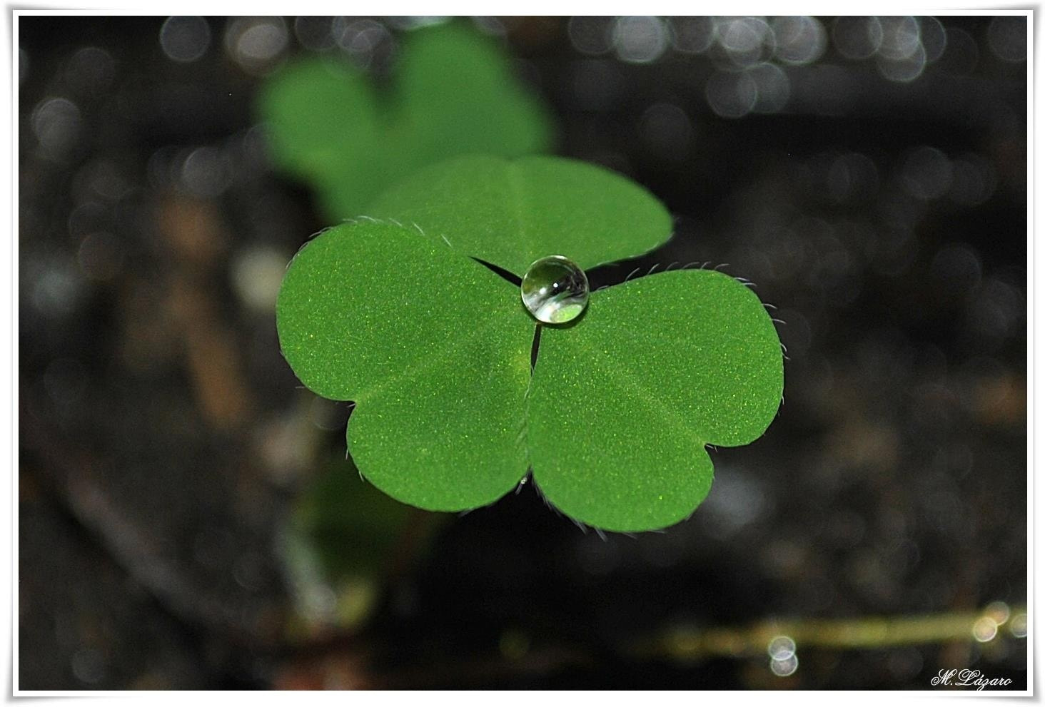 Photograph Clover by Marian LMartin on 500px