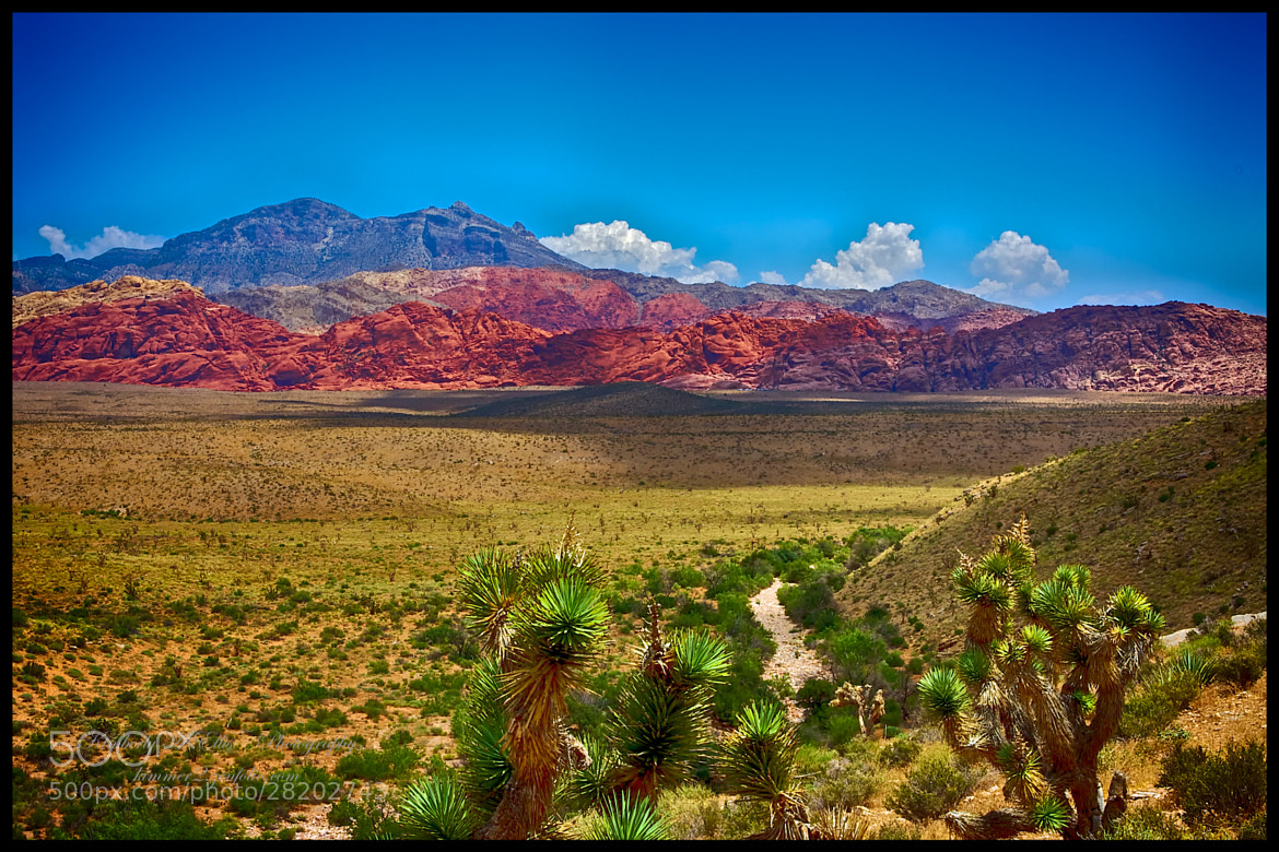 Photograph Joshua trees & Red Rock Vista by Kimberly Ellis on 500px