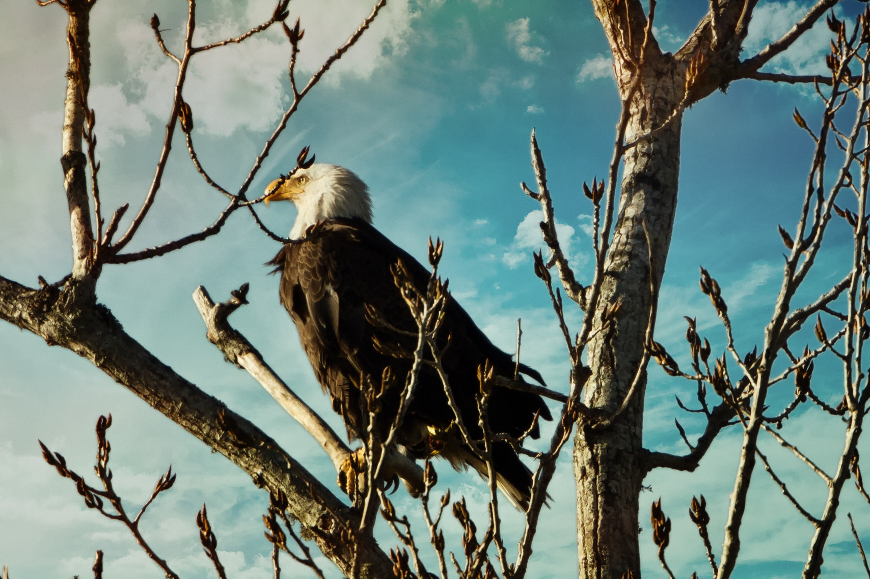 Photograph Bald Eagle by Darrell Miller on 500px