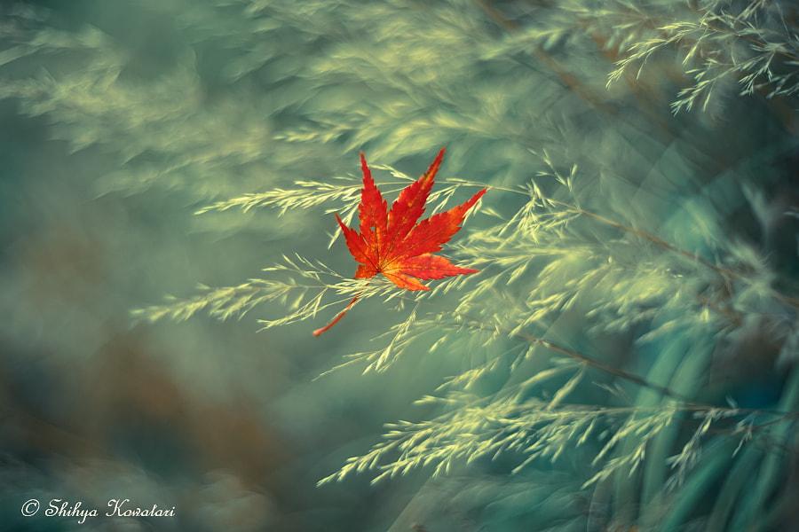One Autumn, автор — Shihya Kowatari на 500px.com