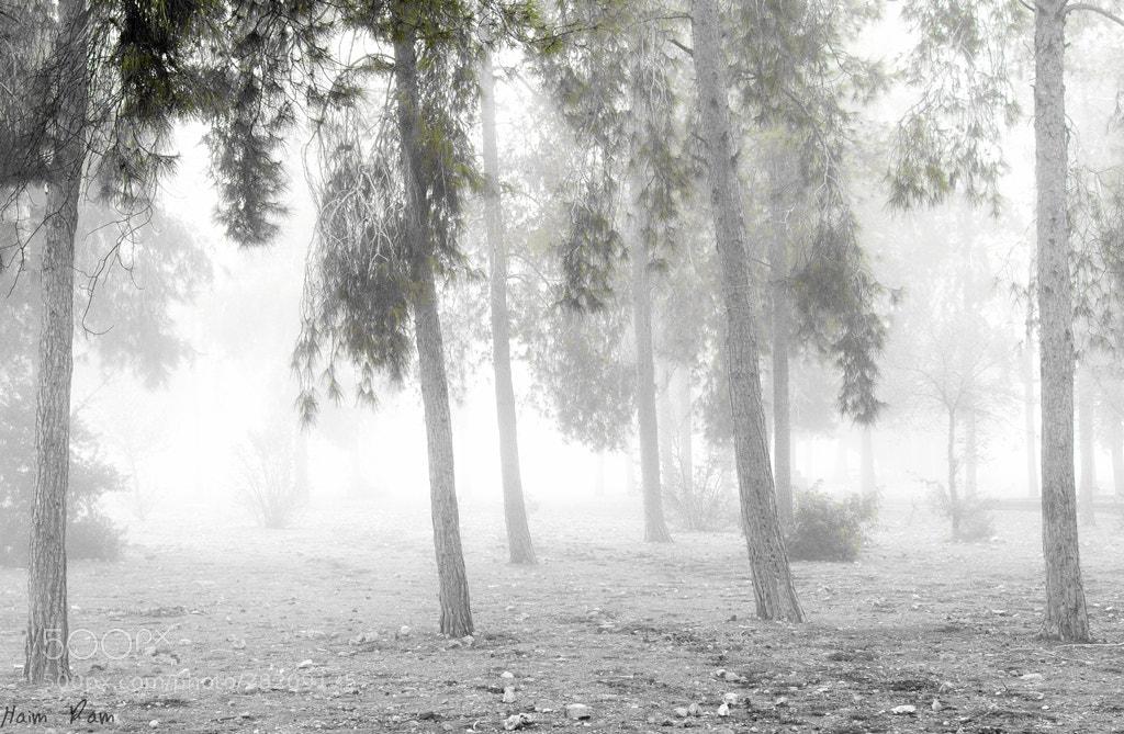 Photograph Murderer's hiding-place by Haim Ram on 500px