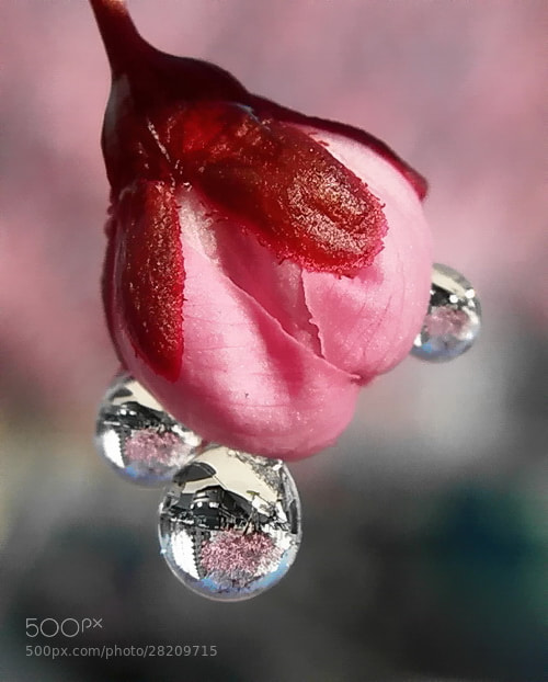 Photograph spring drop by tugba kiper on 500px