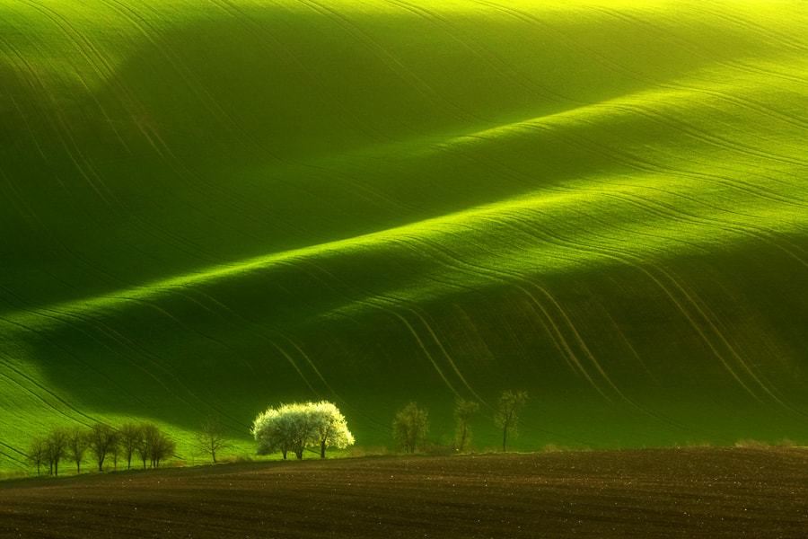 Photograph White tree by Marcin Sobas on 500px