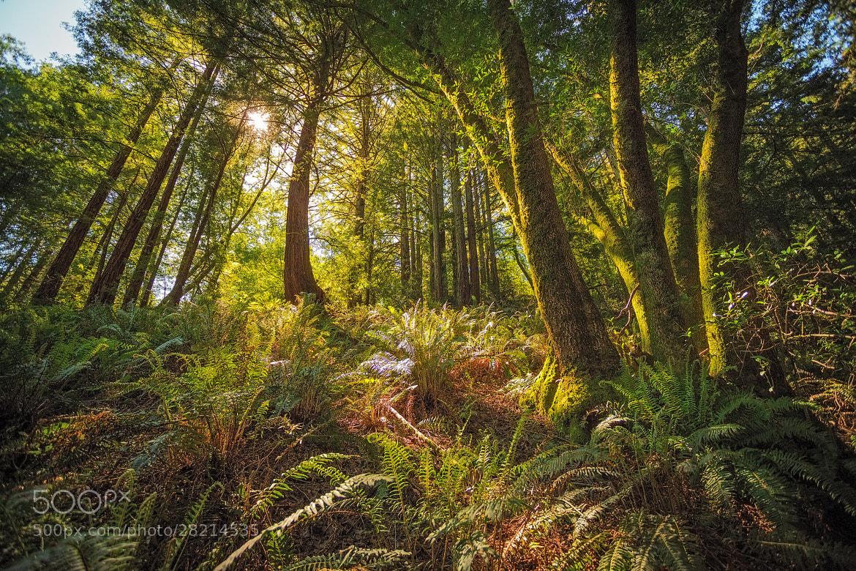 Photograph Redwood Regional by Ryan Fernandez on 500px