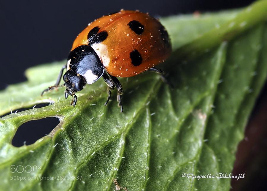 Photograph Small predators by A.A abdelmajid on 500px