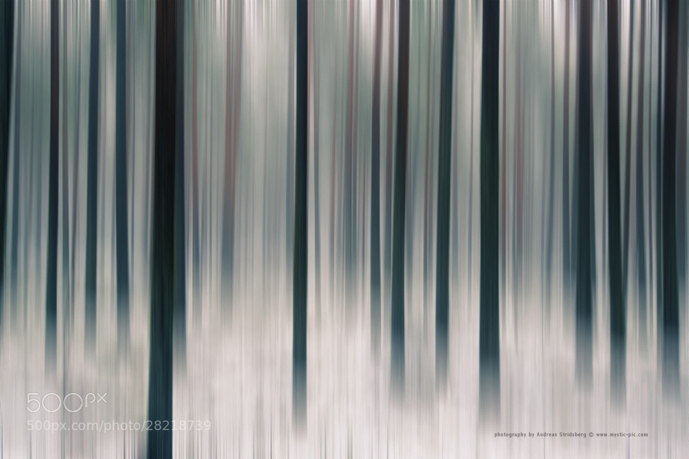 Photograph Foggy Forest by Andreas Stridsberg on 500px