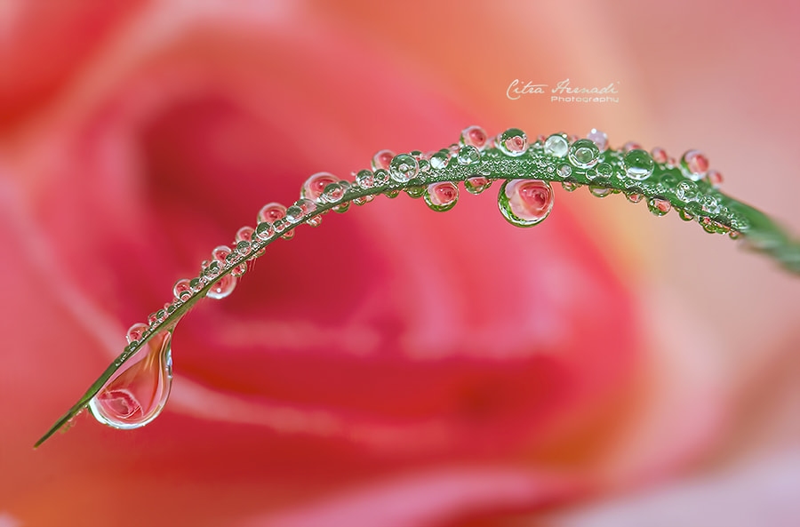 Photograph ... True Love ... by Citra Hernadi on 500px