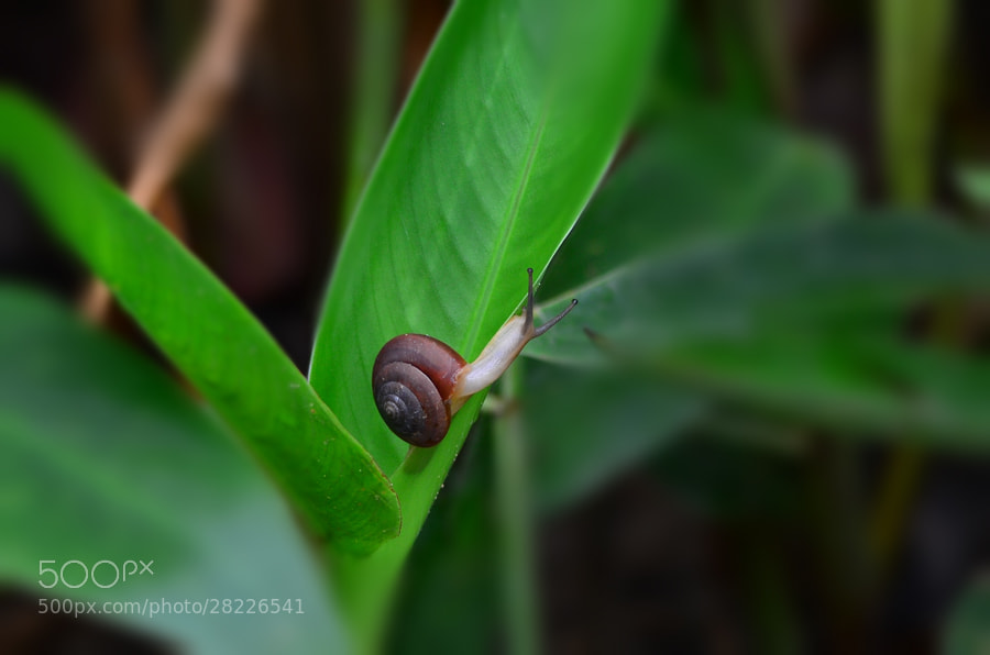 Photograph snail by Khoo Boo Chuan on 500px