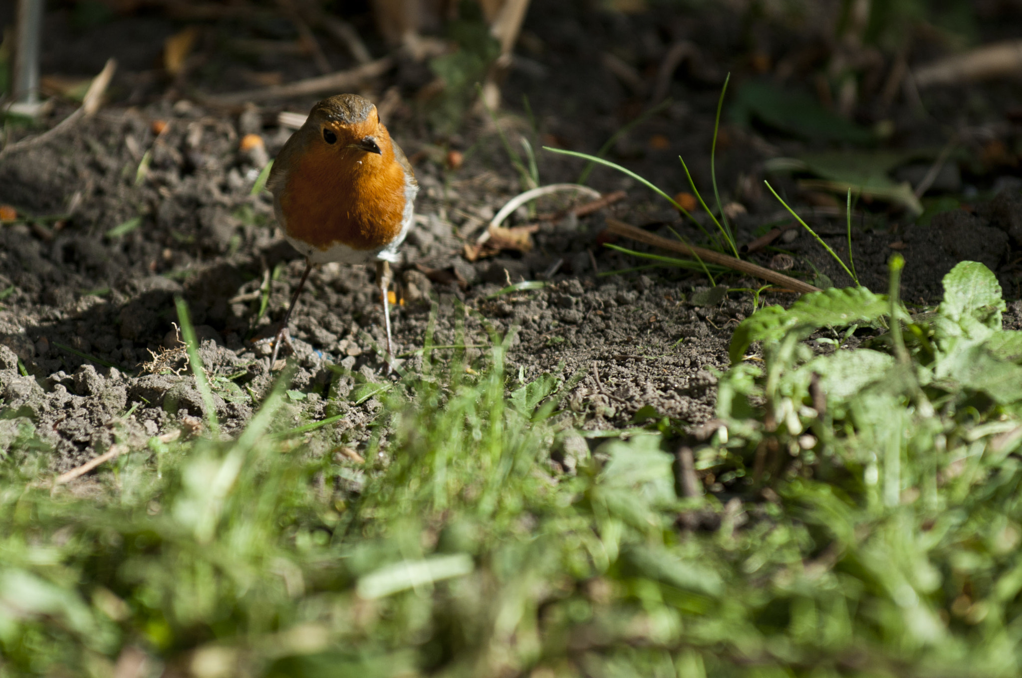 Photograph Curious robin by Graham Hush on 500px