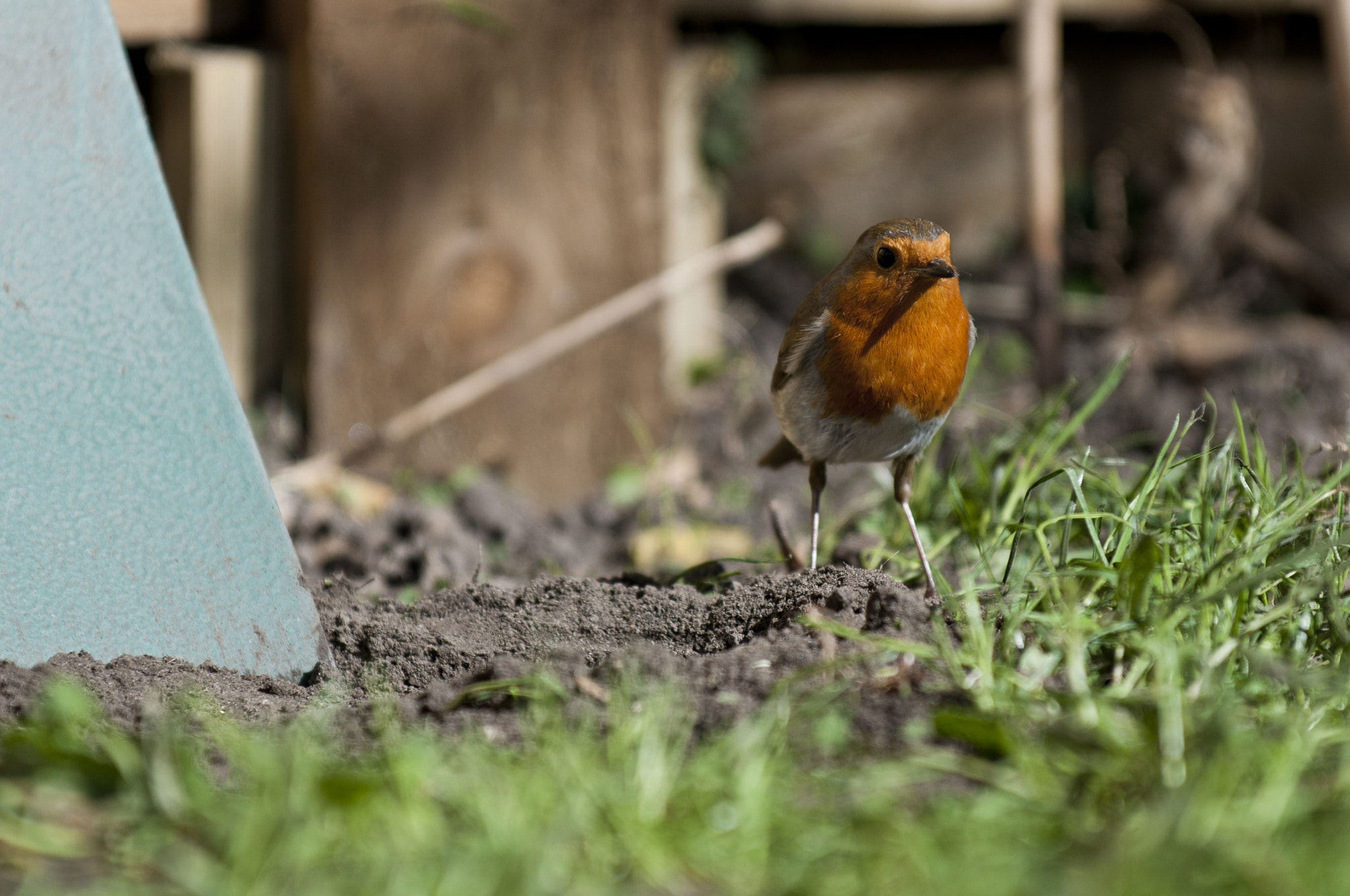 Photograph Robin and spade by Graham Hush on 500px