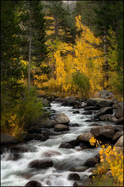 Photograph Seeking Nature by Laurie Rubin on 500px