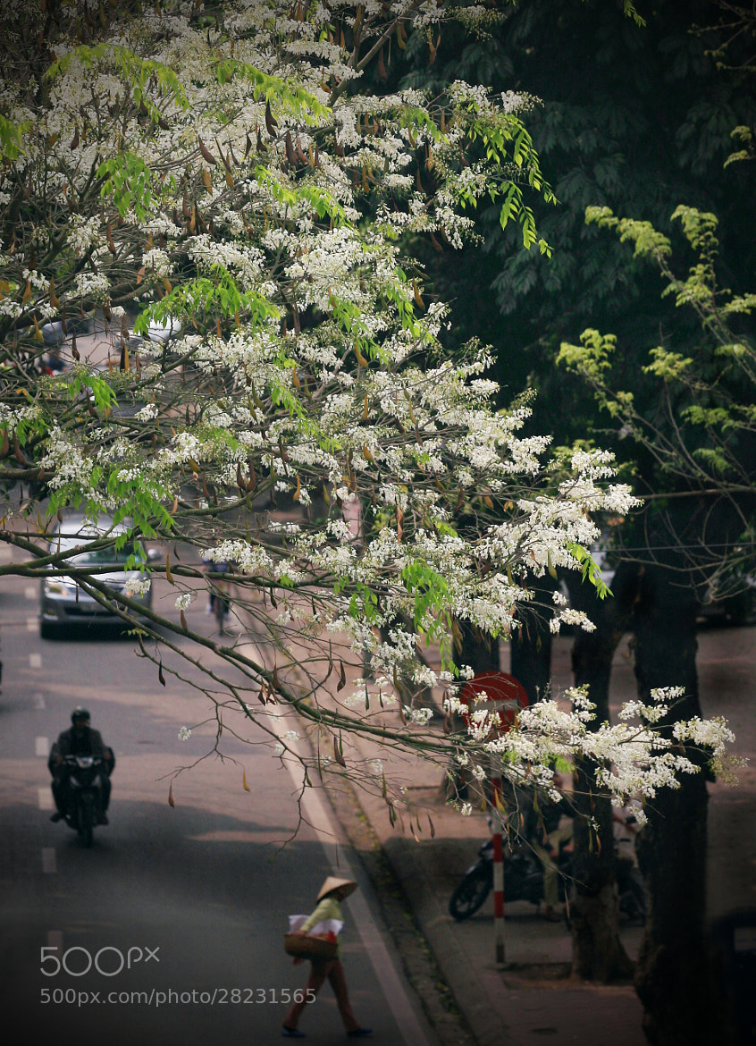 Photograph March in Hanoi by Le Bich on 500px