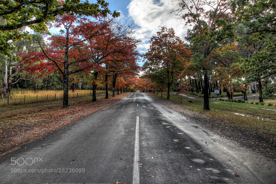 Photograph Driving colour by Pedro Catalão on 500px