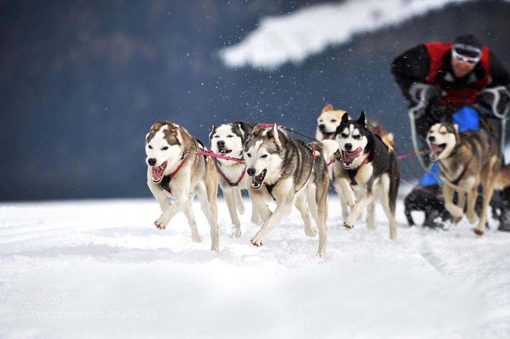 Photograph Wintersport auf 4 Pfoten..... by Anne Geier on 500px