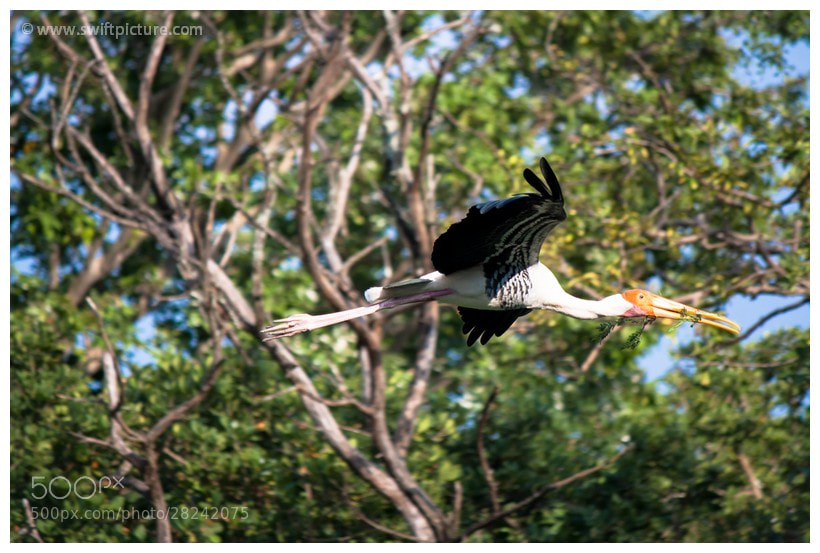 Photograph Painted Stork by Vibin Andrews on 500px