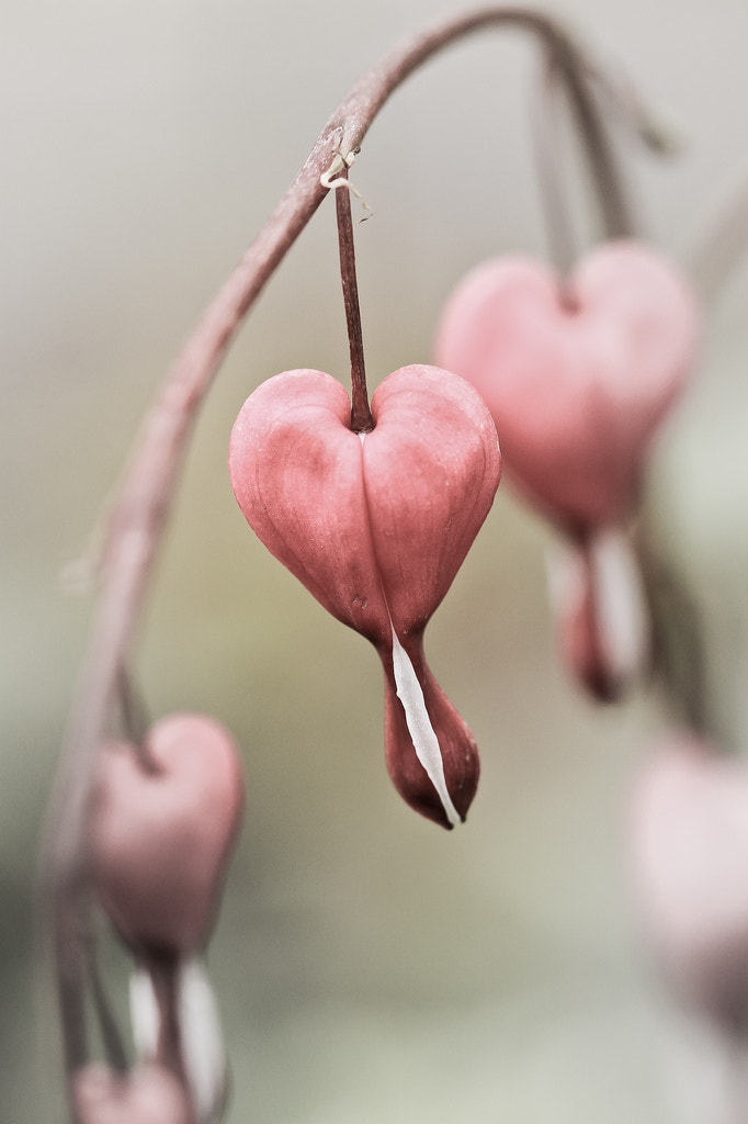 Photograph Heart by Marianne Røsvik on 500px