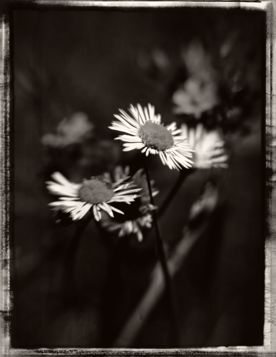 Photograph Couple of Flowers by Matt H on 500px