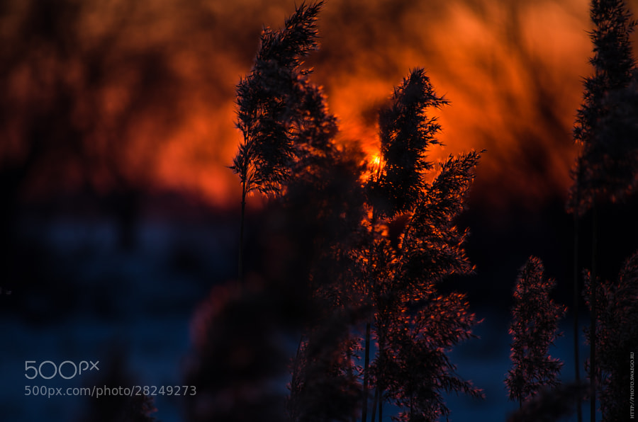 Sky on fire by Tolik Maltsev on 500px.com
