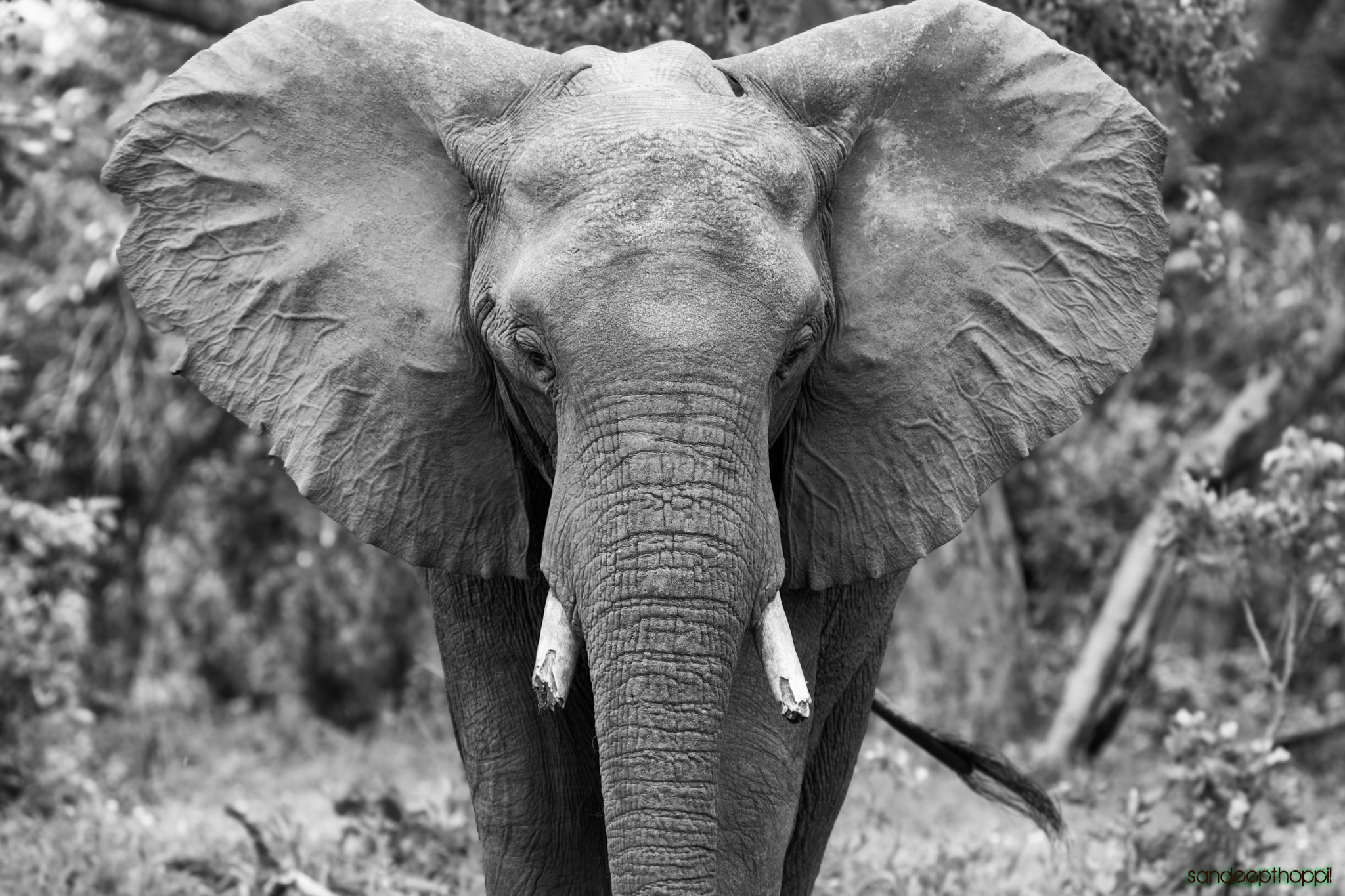 Photograph Broken Ivory by Sandeep Thoppil on 500px