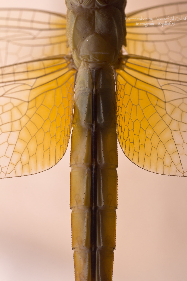 Photograph Dragonfly Abstracy by Yousef Al Qallaf on 500px