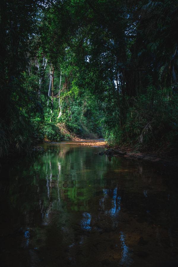 The Olu Dola, Akuressa, Sri Lanka #2 by Son of the Morning Light on 500px.com