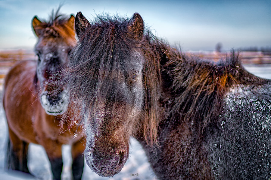 The Most Stronger Horses by Teh Han Lin on 500px.com