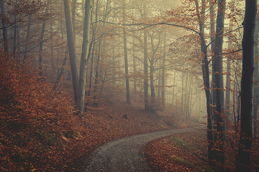 through the fog through the forest by Susanne Ludwig on 500px.com
