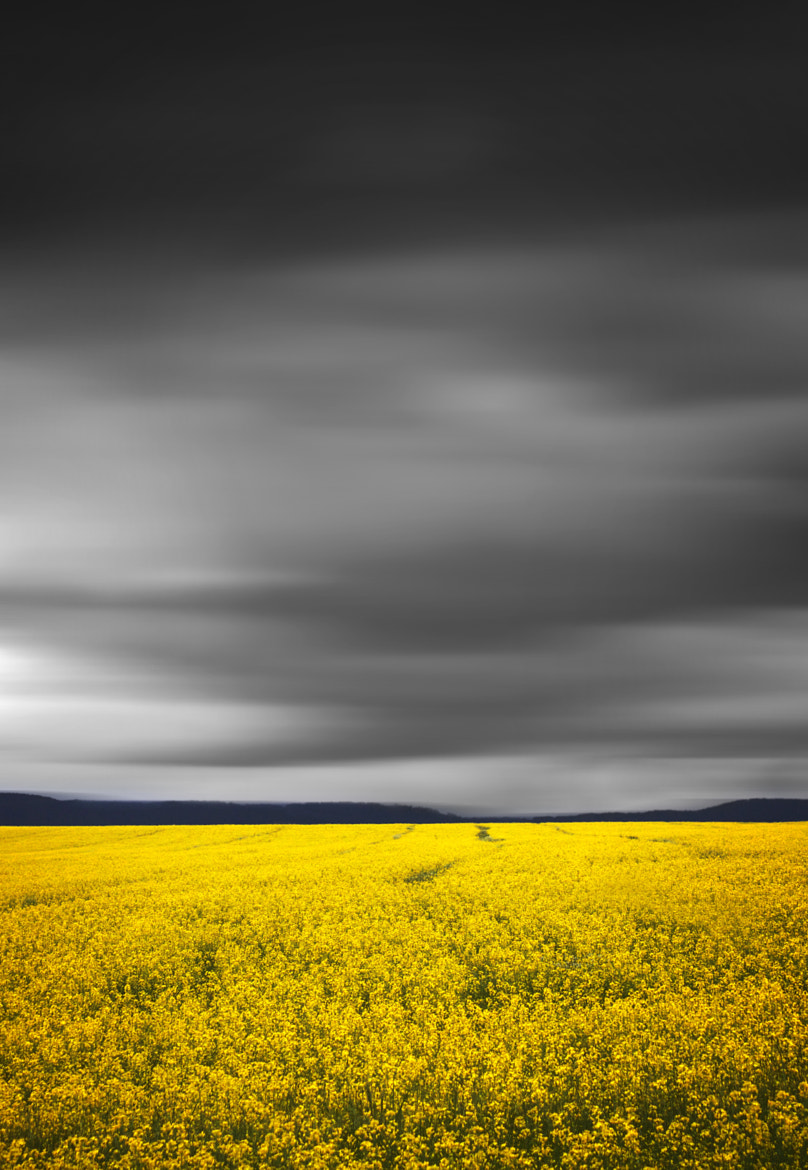 Photograph Fields Of Yellow || BATHURST CANOLA CROPS by Rhys Pope on 500px