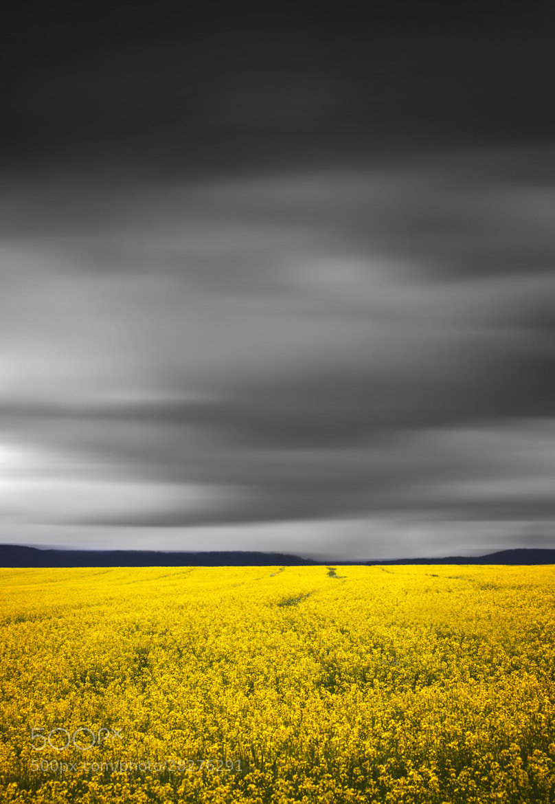 Photograph Fields Of Yellow    BATHURST CANOLA CROPS by Rhys Pope  on 500px