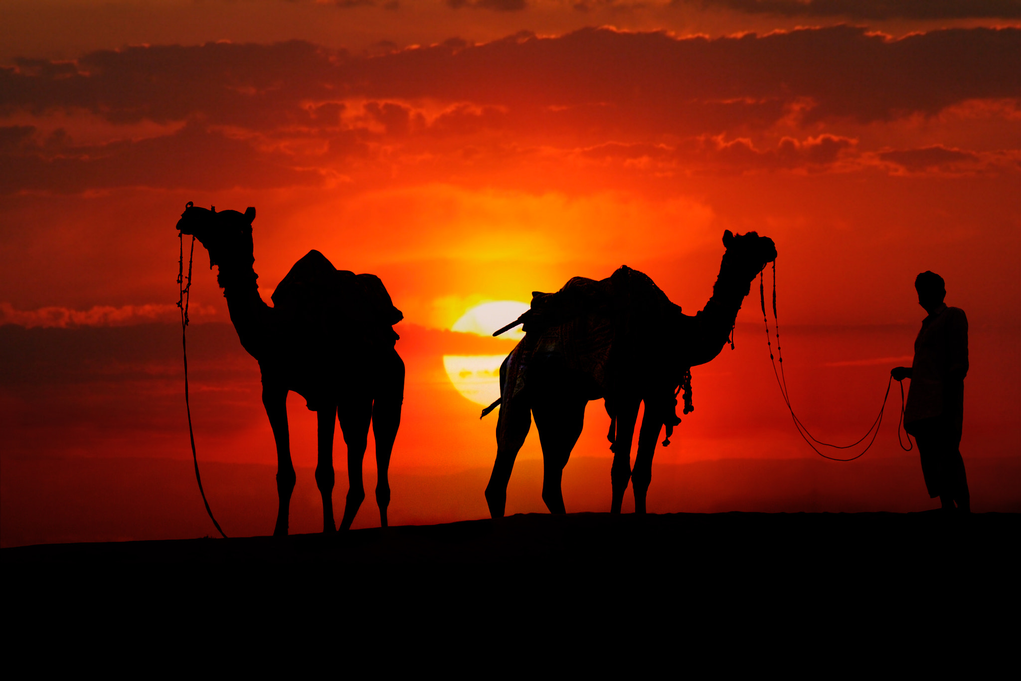 Photograph Silhouette of Camels in the Desert at Sunset by Leander Nardin on 500px