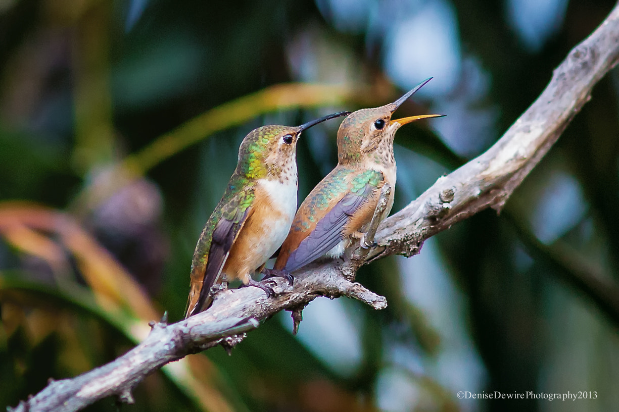 Photograph Double Trouble by Denise Dewire on 500px