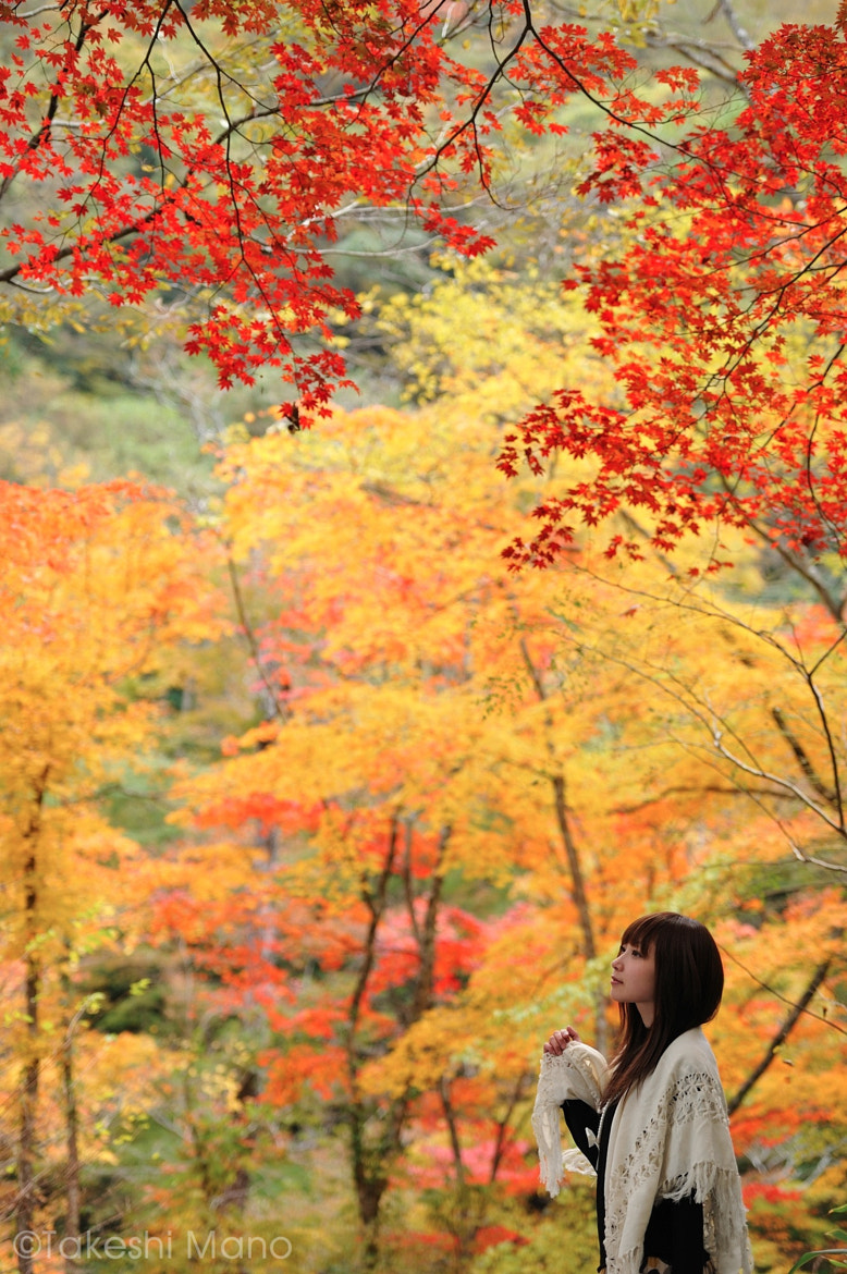 Photograph autumn colors by Takeshi Mano on 500px