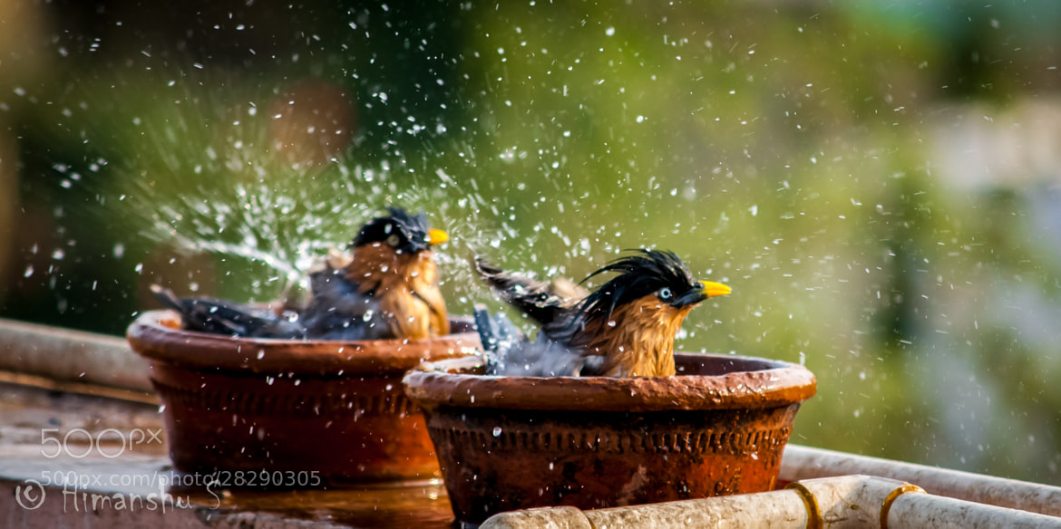 Photograph synchronized swimming by Himanshu Sharma on 500px