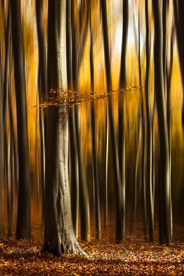 Transcendence by János Puskás on 500px.com