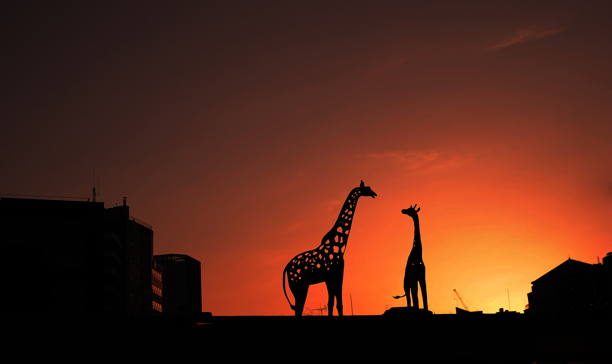 Photograph Giraffe on the roof by Sunyoung Lee on 500px